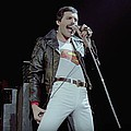 Freddie Mercury tribute lion set to join Pride of Cape Town - Freddie the Lion, an eye-catching life-size lion statue designed in the guise of rock legend …