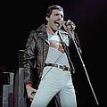 """Freddie Mercury 'The Great Pretender' to be released - The new Freddie Mercury DVD and Blu-ray, """"The Great Pretender"""" will be released on September 24th. …"""